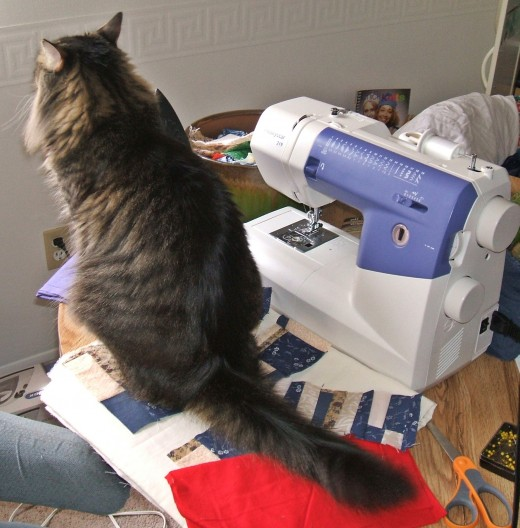 Felix being helpful while I try to quilt.