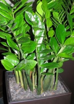 traditional feng shui plants. Black Bedroom Furniture Sets. Home Design Ideas
