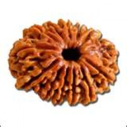 Different types of Rudraksha Beads are associated with different planets, stars and deities. They can be worn as a planetary remedy based on their association.
