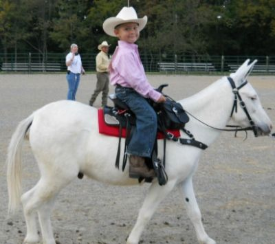 Four Year Old Boy on a Three Year Old Mini Mule -   Growing Up and Learning Together