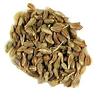 Anise seed oil offers cure in scabies