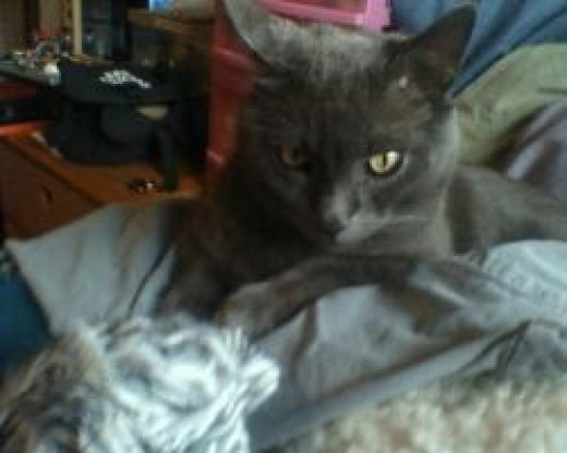 Dorian helping me knit
