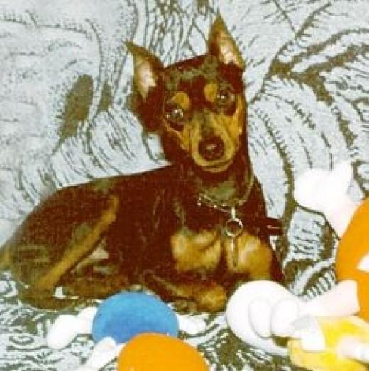 Hans as a puppy