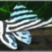 plecostomus profile image
