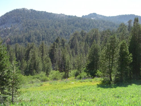 Lush Meadow at 8000 ft