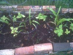 garden update 2