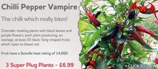 Chilli Vampire