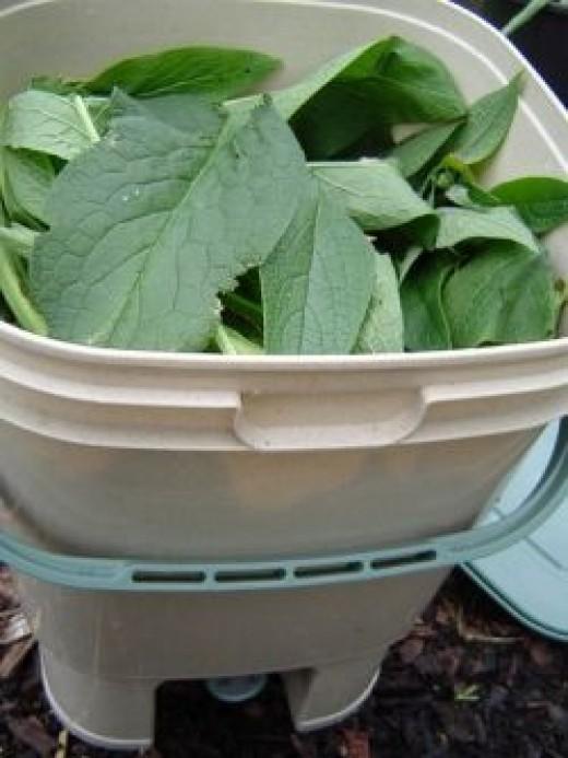 Comfrey bucket