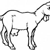 raisinggoats profile image