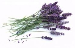 How To Use Lavender Essential Oils