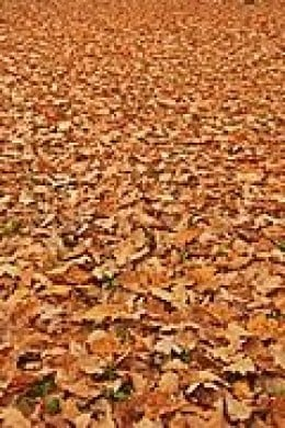 Leaves to compost