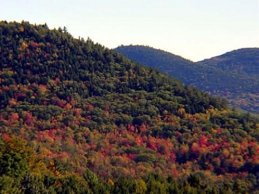 Mountainside with Foliage
