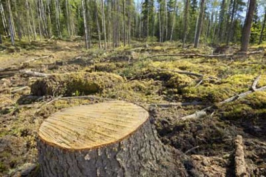 logging and kaingin deplete water supply