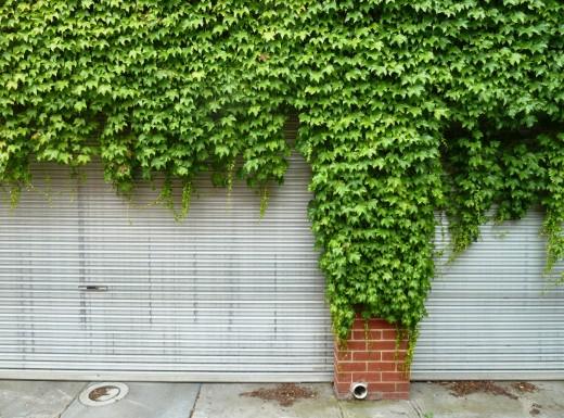 photo green ivy cover rolling garage door
