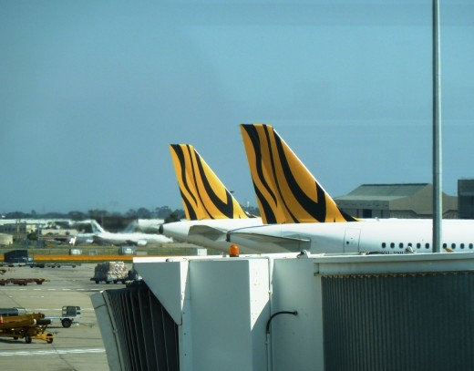 photo two yellow tiger airways aircraft tails