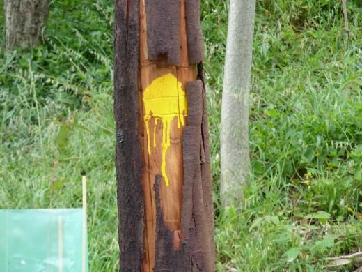 yellow spot on tree