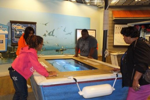 The Sea Life Center Game