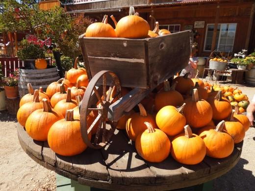 Pumpkin display in wheelbarrow at Jack Creek Farms in Templeton, California