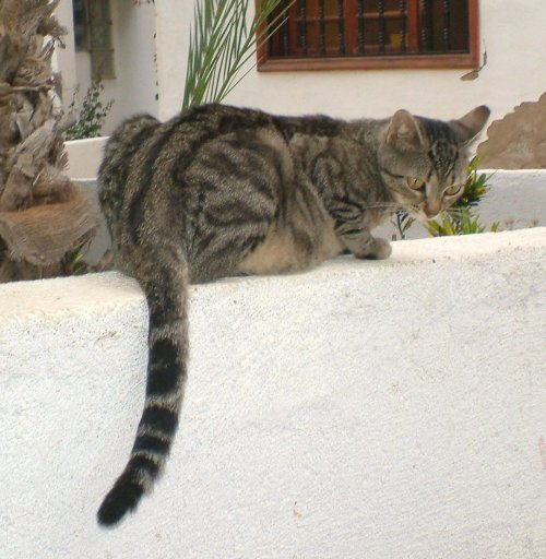 Tiggy again as a young girl on Cindy's wall