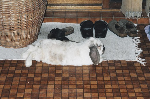 """This is what the rabbit world calls """"happy feet"""".  :)"""