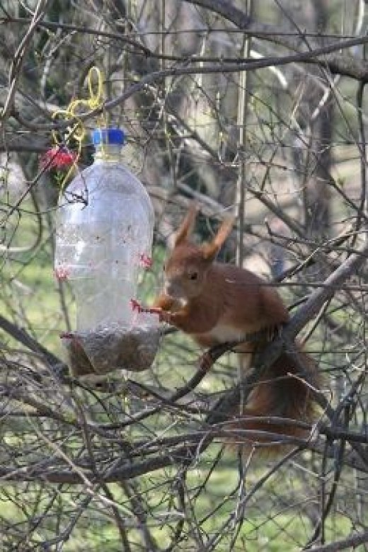 Many plastic bottle bird feeders are not squirrel or weatherproof. See the instructions on how to build one that is.