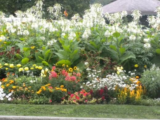 A glorious garden!