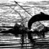 bowfishing lm profile image