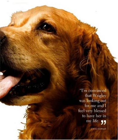 Wrigley The Wonder Dog