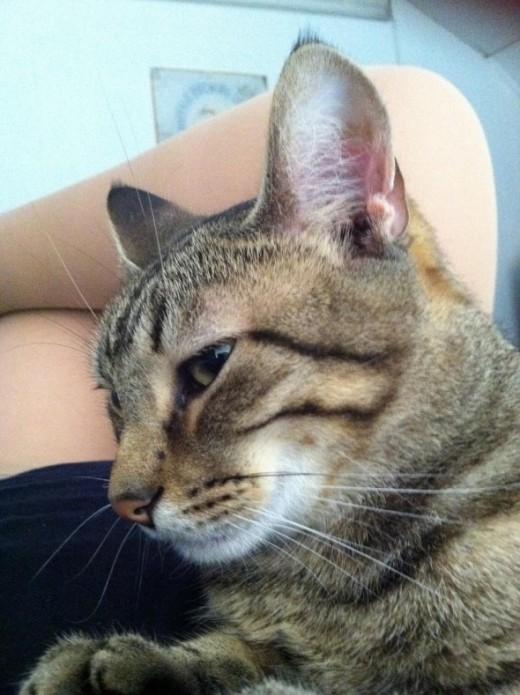 Snuggle kitty's profile