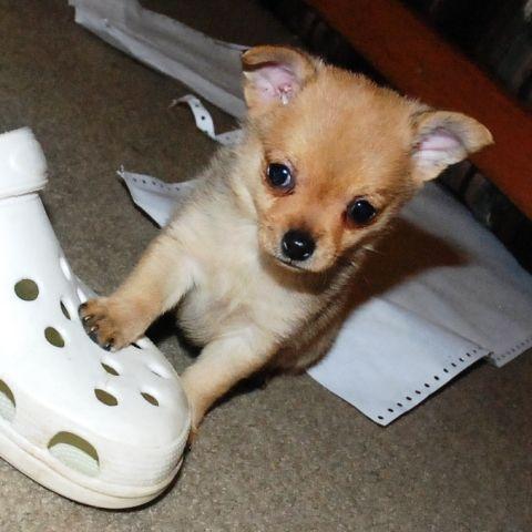 I'm smaller than a shoe