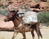 A horse delivering mail