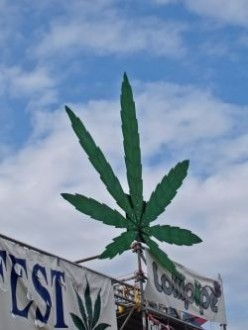 Seattle Hempfest: More Than You Think It Is