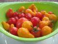 Indoor Vegetable Gardening Using Containers