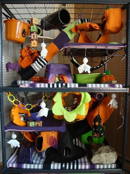 Decorate Your Rat Cage For Halloween Hubpages