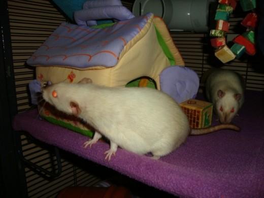 Koko and Jimi