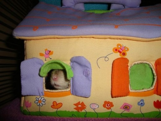 Koko peeks out her new house