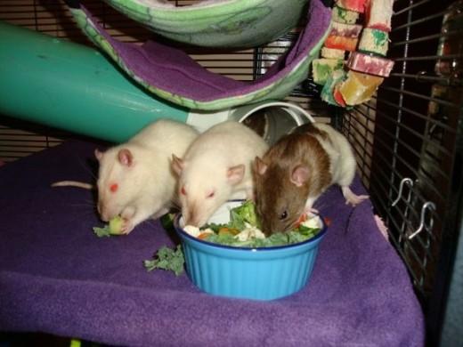 Jimi, Koko, and Lily