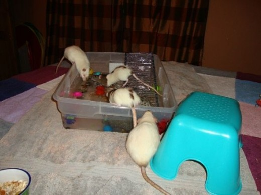 Koko, Jimi, Lily, and Rue