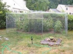 How to Build a Squirrel Proof Garden Enclosure for under $100.00