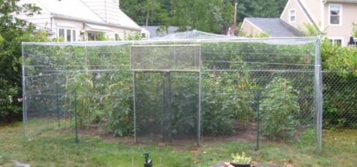 Completed Garden Enclosure