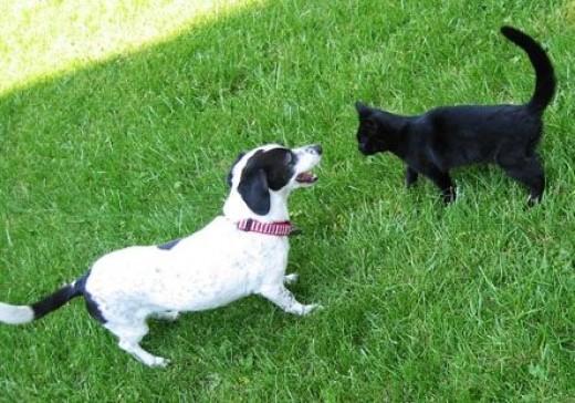 Dog vs. Cat?