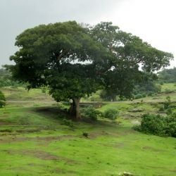 Rural Ethiopia in its verdant glory. Photo by me.