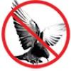 absolutebird lm profile image