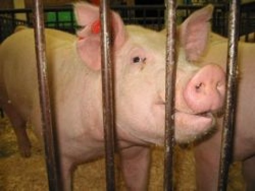 Bacon behind bars