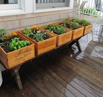 Recycled herb garden