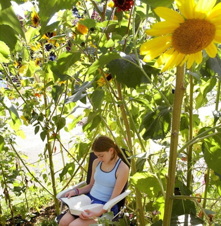 Sunflower garden house