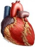 How to Lower Your Cholesterol and Triglycerides Without 'Lipitor' or...