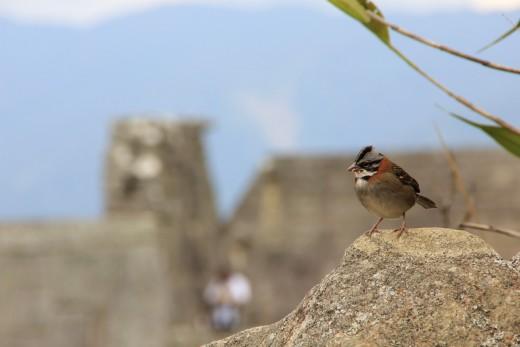 Birds @ the ruins