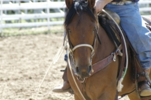 It's important to keep your bred mare fit.