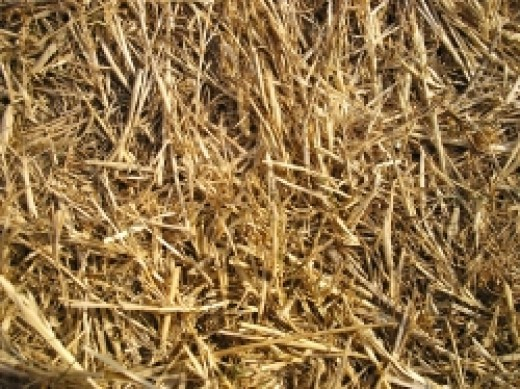 Straw is an excellent bedding for when the mare delivers.